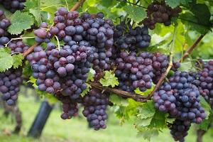 wine tour winery